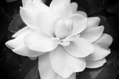 """""""Bloom"""", Nanine Hartzenbusch Fox"""