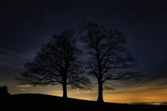 """Twin Trees at Night"", Susan Stamey"