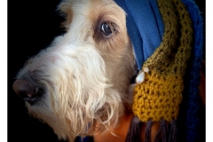 """""""Girl with the Pearl Earring"""" by Kate Kirby ~ Photography ~ Not for Sale"""