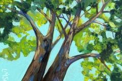 """Canopy View III"" - Acrylic by Lisa Shimko - $75"