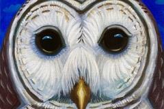"""Dream Gaze - Barred Owl"" - Acrylic by Lisa Shimko - $75"
