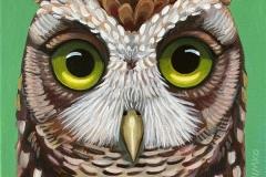 """Dream Gaze - Screech Owl"" - Acrylic by Lisa Shimko - $75"