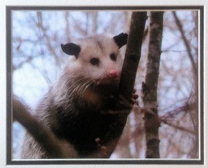 donna bradley playin possum photo
