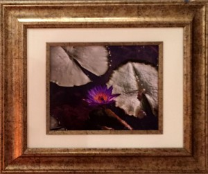 Stephanie Vissage Among The Lily Pads Photography  $100