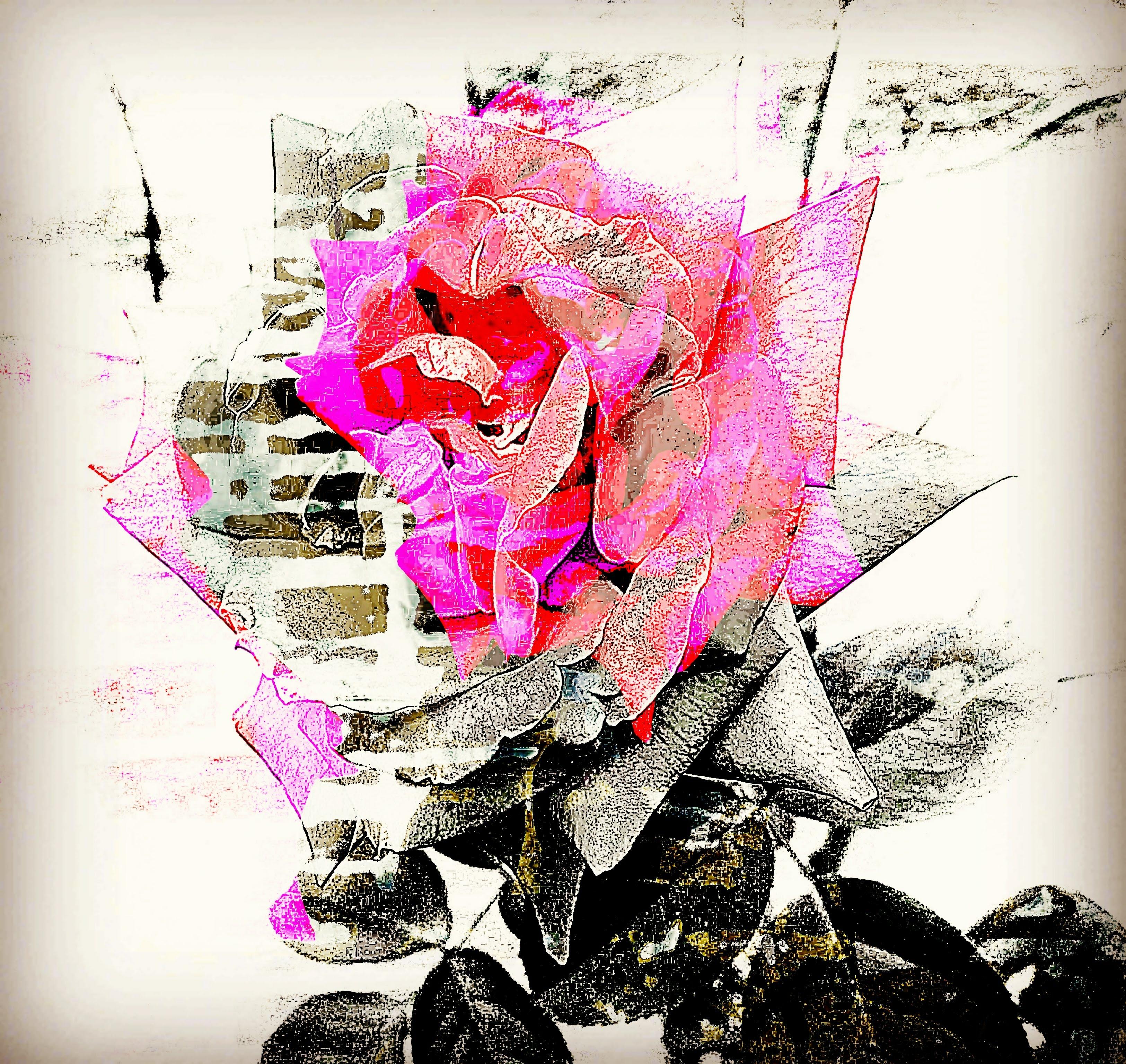 Climbing Rose, Carolyn Gibson