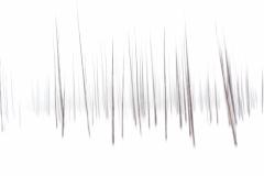 """Lodge Pole Pine Ghosts"", Alan Weinberg"