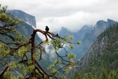 """""""Near Inspiration Point, Yosemite National Park"""", Dwight Hotchkiss"""