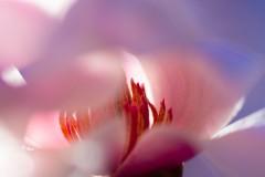 """Dancing Magnolia"", Ellen Rhodes-Mims"