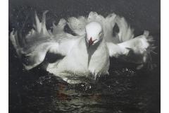 """""""Peace Dove in Turmoil"""", Fernando Podio"""