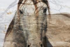 """""""Spirit"""", Kate Kirby"""