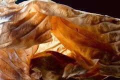 """""""Leaf"""", Kate Kirby"""