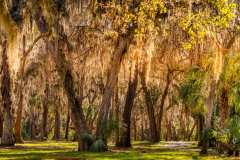"""""""Moss on Trees"""", Larry Druffel"""